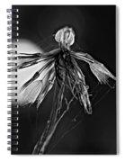 Finale Bw Spiral Notebook