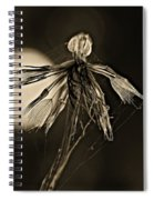 Finale Sepia Spiral Notebook