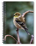 Finch In An Ice Storm Spiral Notebook