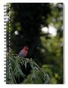 Finch In The Willow Spiral Notebook