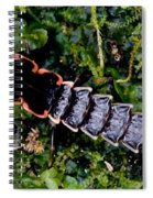 Firefly Larva Spiral Notebook