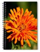 Firey Sunburst Spiral Notebook