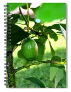 First Avocado Spiral Notebook