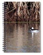 First Bufflehead Spiral Notebook