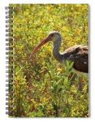 First Year White Ibis Spiral Notebook