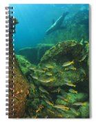 Fish And A Sea Lion In The Water At Los Spiral Notebook