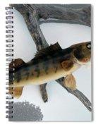 Fish Mount Set 02 Bb Spiral Notebook