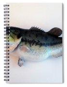 Fish Mount Set 07 A Spiral Notebook