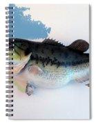 Fish Mount Set 07 C Spiral Notebook