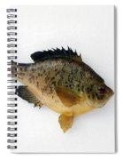 Fish Mount Set 08 A Spiral Notebook