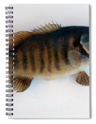Fish Mount Set 10 A Spiral Notebook