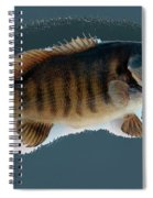 Fish Mount Set 10 B Spiral Notebook