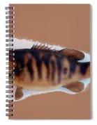 Fish Mount Set 11 B Spiral Notebook