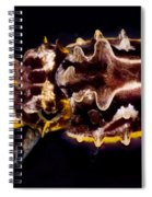 Flamboyant Cuttlefish Spiral Notebook