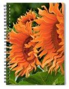 Flaming Sunflowers Spiral Notebook