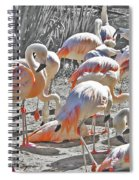 Flamingos  Spiral Notebook