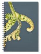 Flashlit Fern Spiral Notebook