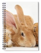 Flemish Giant Rabbit With Guinea Pigs Spiral Notebook
