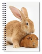 Flemish Giant Rabbit With Red Guinea Pig Spiral Notebook