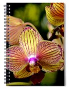 Flirting Spiral Notebook