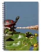 Florida Redbelly Turtle Spiral Notebook