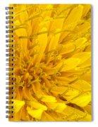 Flower - Dandelion Spiral Notebook