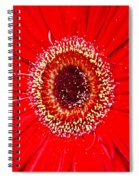 Flower 10 Spiral Notebook