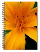 Flower And Bee Spiral Notebook