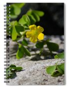 Flower And Dancing Clover Spiral Notebook