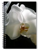 Flower Painting 0004 Spiral Notebook