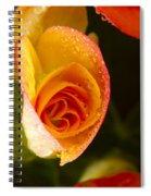 Flower Rieger Begonia 5 Spiral Notebook