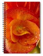 Flower Rieger Begonia 6 Spiral Notebook