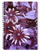 Flower Rudbeckia Fulgida In Uv Light Spiral Notebook