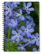 Flower Wild Blue Phlox 1 B Spiral Notebook