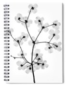 Flowering Dogwood, X-ray Spiral Notebook