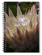 Flowers Of New Zealand 3 Spiral Notebook