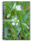 Flowers Of The Grass Spiral Notebook