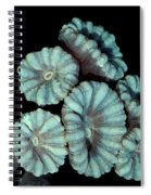Fluorescent Coral In In White Light Spiral Notebook