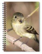 Flycatcher On A Branch Spiral Notebook