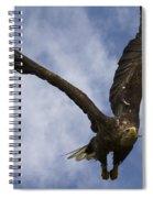 Flying European Sea Eagle I Spiral Notebook