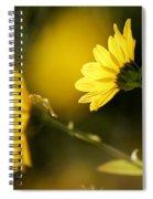 Focos De Luz Spiral Notebook