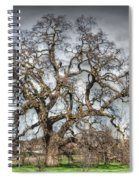 Folsom Oak Tree Spiral Notebook