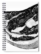 Food: Beef Spiral Notebook