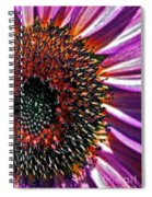 For Ana Spiral Notebook
