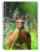 Forest Buck Spiral Notebook