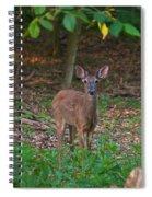 Forest Edge 7365 1754 Spiral Notebook
