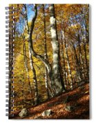 Forest Fall Colors 4 Spiral Notebook