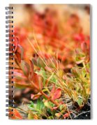 Forest Folaige Spiral Notebook