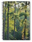 Forest Illumination At Sunset Spiral Notebook