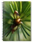 Forest Star Spiral Notebook